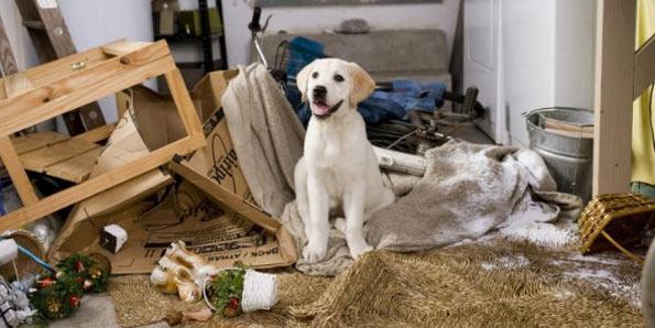 Piores Raças de Cachorro para ter em Casa ou Apartamento